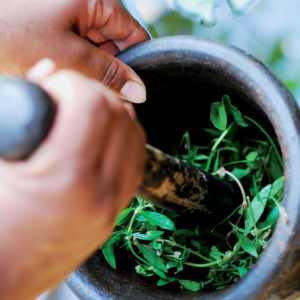 preparation of ayurvedic medicines using herbs